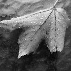 Leaf by John Schneider