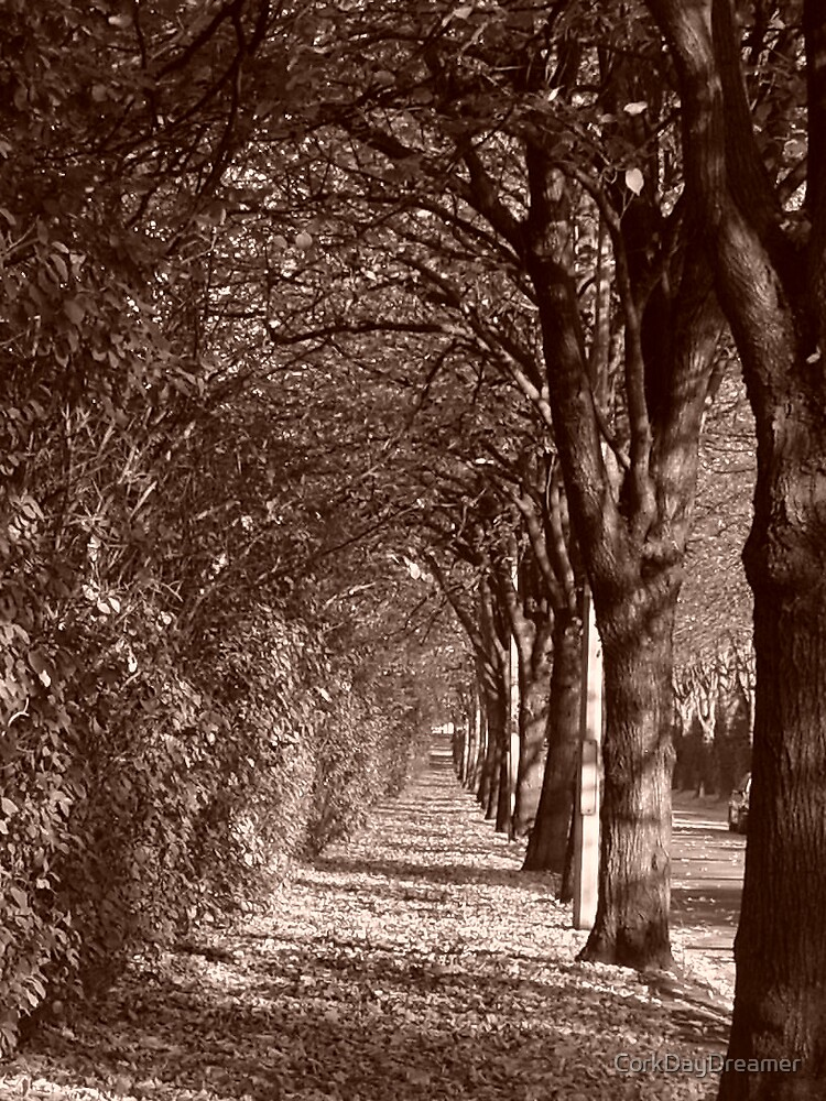 Tunnel of Trees by CorkDayDreamer