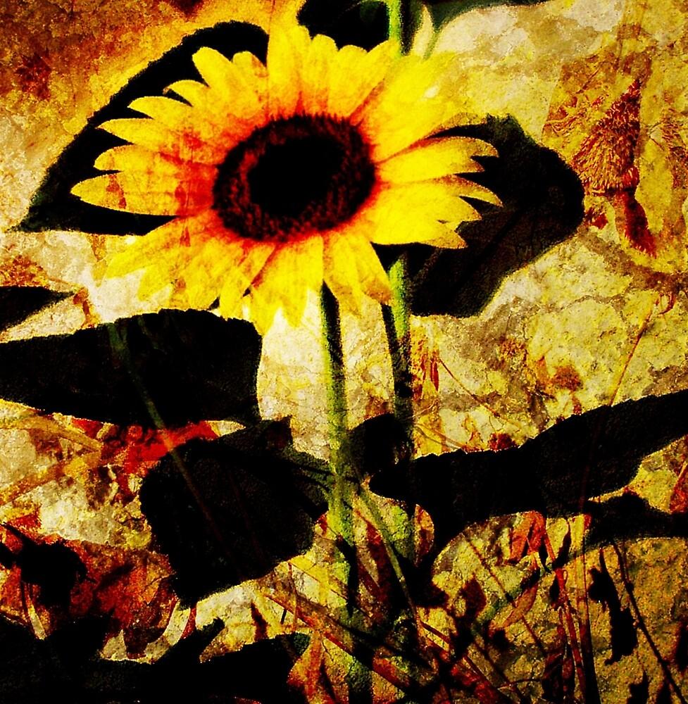 Sunflower Shadows by Karirose
