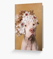 Flower Power, Maria Greeting Card