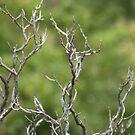 Gnarled Tree. by Jonathan Bartlett