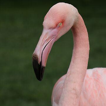Flamingo bird bird by eickys