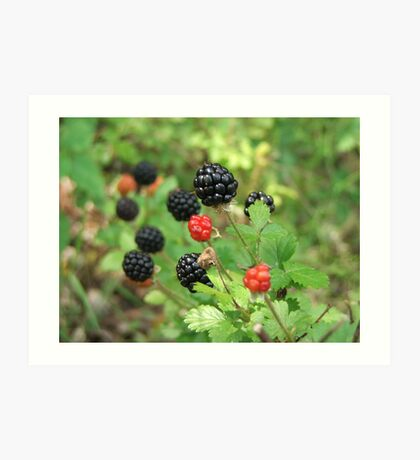 In The Berry Patch Art Print