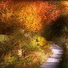 Autumn - Trees - Heaven's trail by Michael Savad