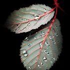 Natures Diamonds by Christine Lake
