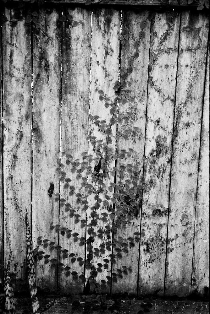 Imprints by Cassandra
