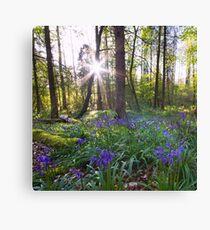 The Bluebells Northern Ireland Canvas Print