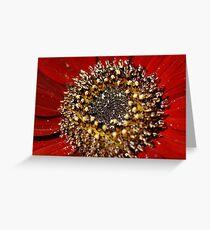 Gerbera Ruby Greeting Card