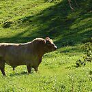 A load of bull by georgieboy98