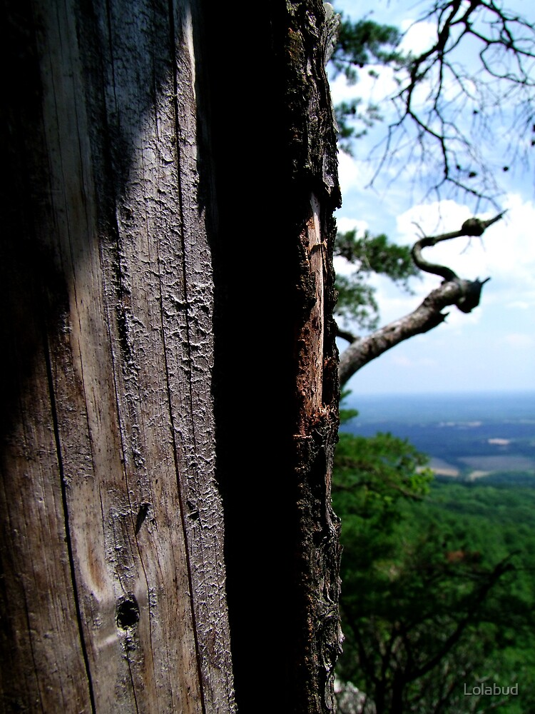 A Tree at Pilot Mountain by Lolabud