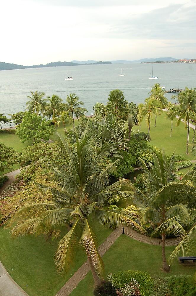 Borneo palms by astanga