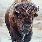 American Bison von OLena Art - Marke von OLena  Art ❣️