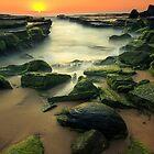 Mossy Dream by Arfan Habib