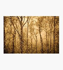 Whispering Snowstorm Photographic Print