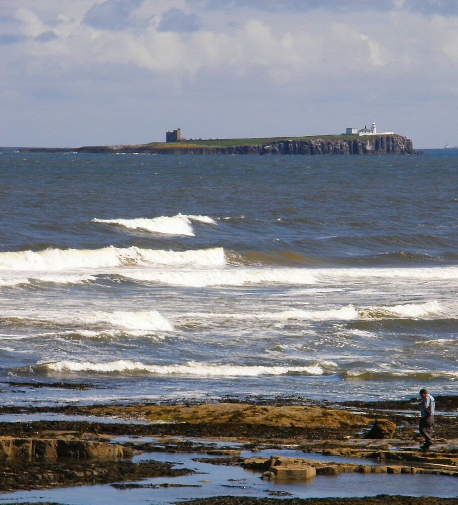 Inner Farne Island, Northumberland, UK by jay12