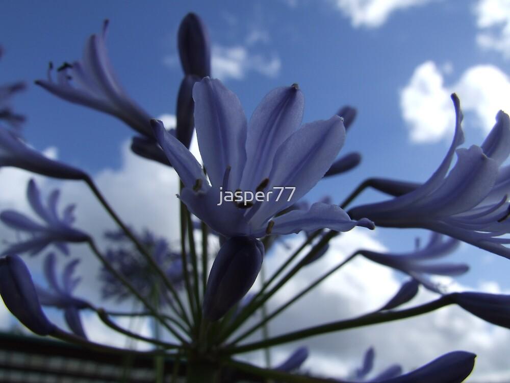 Flower 002 by jasper77