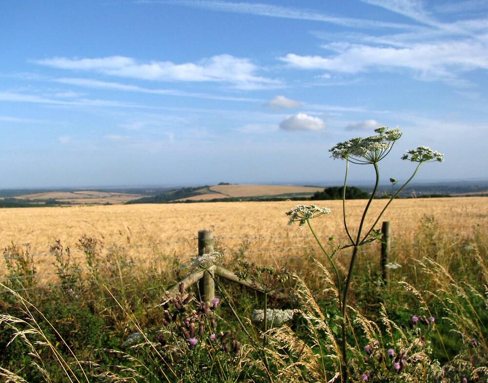 harvest time by Caroline Anderson