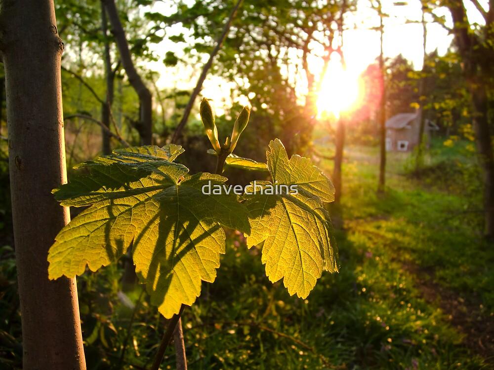 Leaf by davechains
