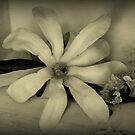 Frühlingsblumen - Stillleben von Evita