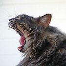 Frankie Froo Froo Yawn by nosajnybor