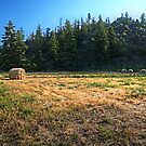 Glacier National Park Lake, Mountains, Hay by StonePics