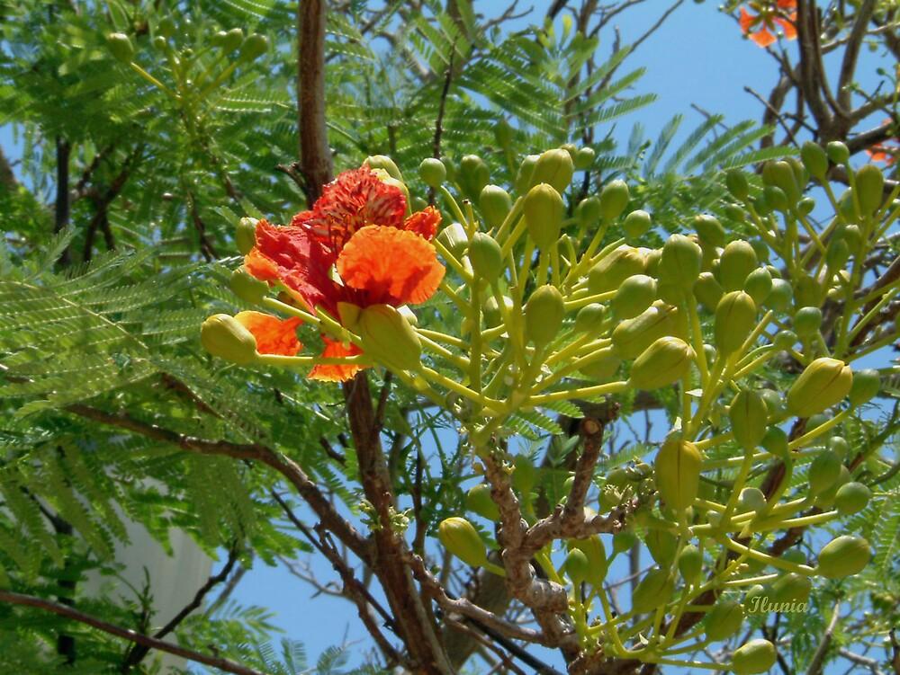 Exotic Flower Tree by Ilunia Felczer