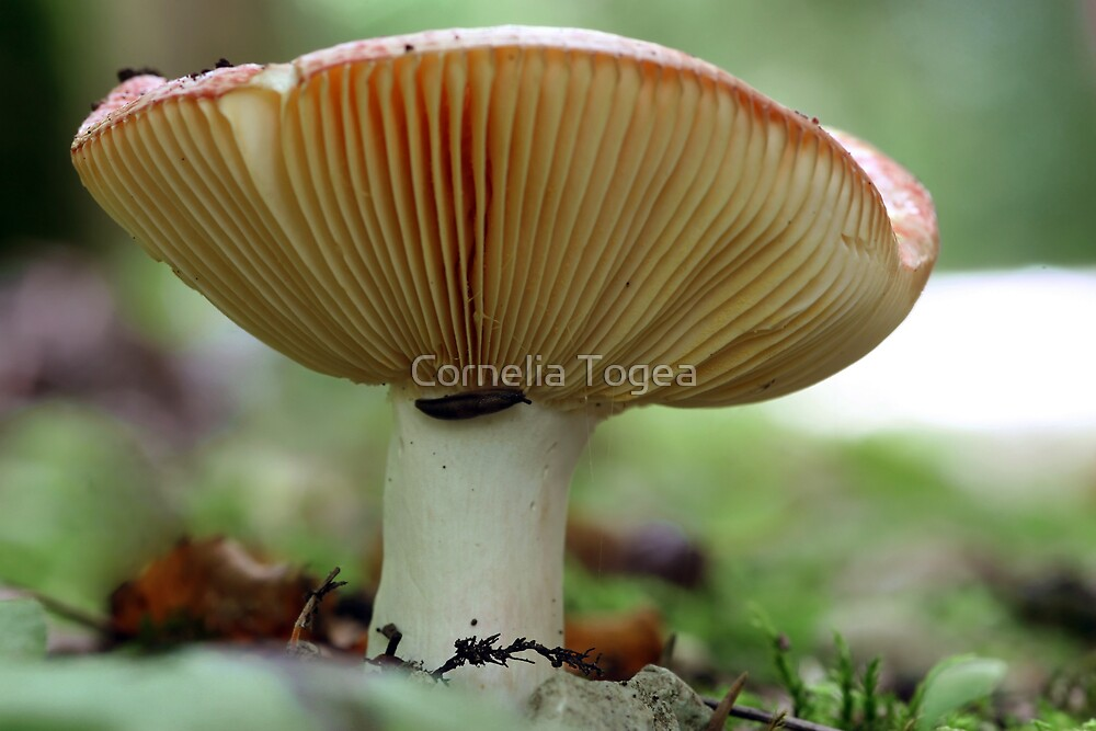 little slug by Cornelia Togea
