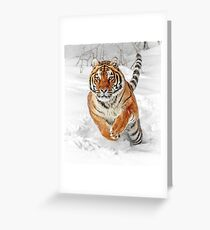 Winter Tiger Greeting Card