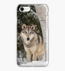Winter Visitor iPhone Case/Skin