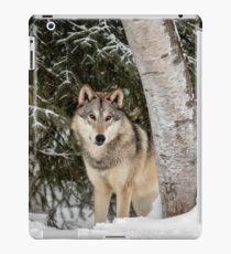 Winter Visitor iPad Case/Skin