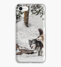Wolf Hide and Seek iPhone Case/Skin