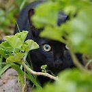 Little hunter by Penny Kittel