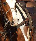 Bronk Riders Guardian .. by Penny Kittel