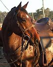 Rodeo pick up horse by Penny Kittel