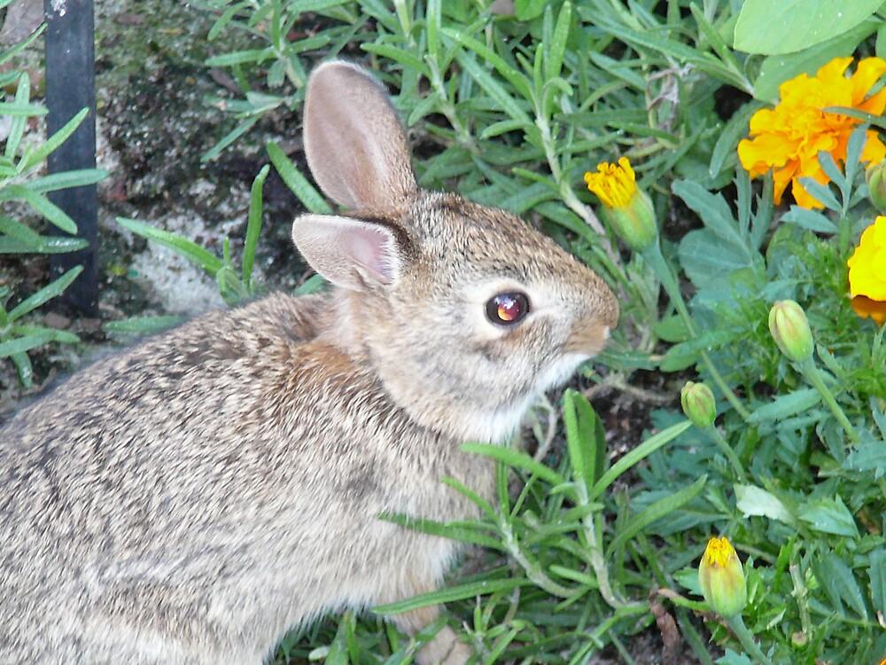 Bunny  by elfin4