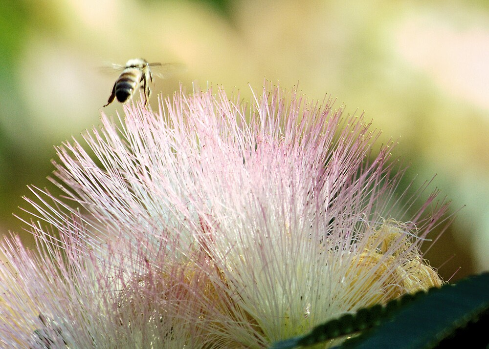 Bee And Mimosa by Dean Bryant Johnson