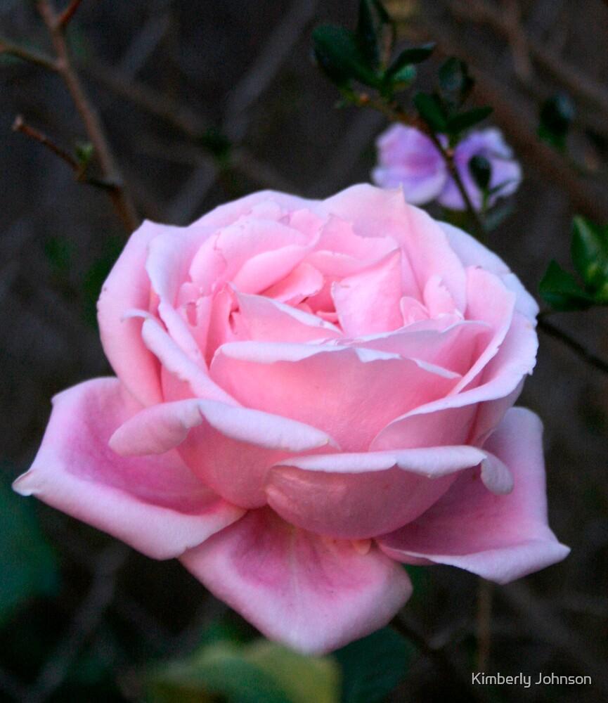 Garden Flowers by Kimberly Johnson