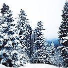 Winter Peace by Neli Dimitrova