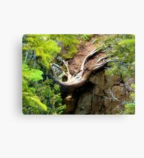 Survival of the Fittest Canvas Print