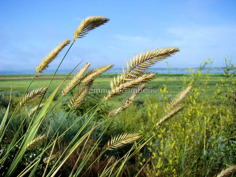 Wheat a Bix by TingyWende