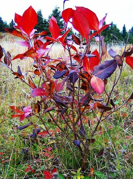 Autumns Breaths by Jamie  Mallard