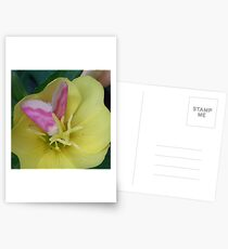 Butterfly on Flower Postcards