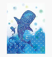 Marokintana - Whale Shark I Photographic Print