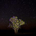 Jacaranda Stars by Penny Kittel