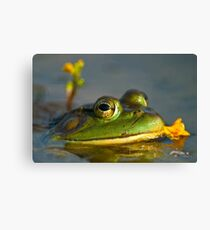 Bull Frog Canvas Print