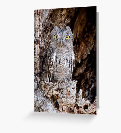 Western Screech Owl Greeting Card