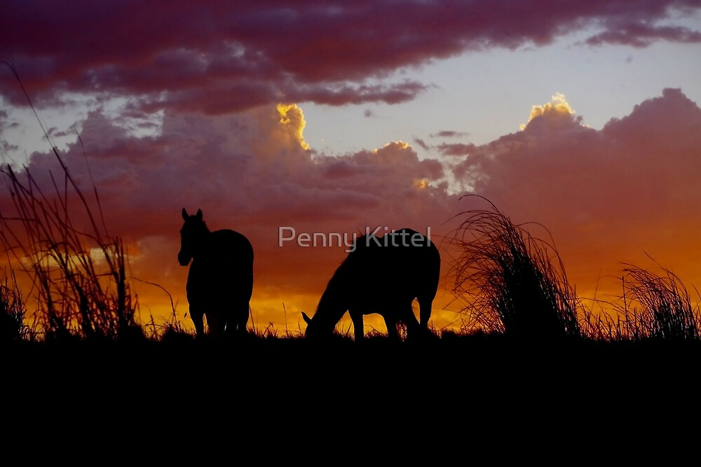Sunset Friends by Penny Kittel