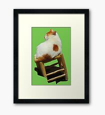 Cat playing perched Framed Print