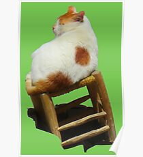Cat playing perched Poster