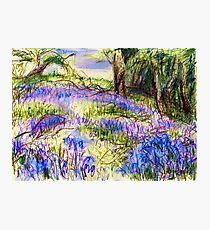 Bluebells by Dolfor Rd, Pen & Pencil Artwork Photographic Print